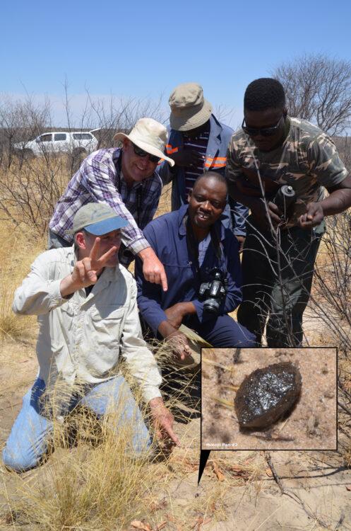 Planetoïde Botswana